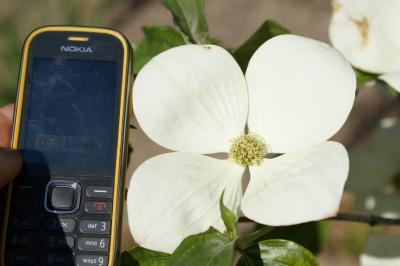 Handygröße der Blüte