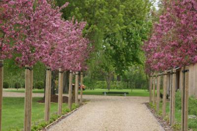 ..auch als Solitärgehölz oder Hausbaum geeignet